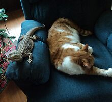 Strange Bedfellows- photo of cat and lizard sleeping by Lorette C. Luzajic