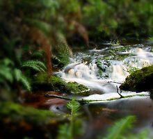 Little Tarkine Rapids by Rhana Griffin