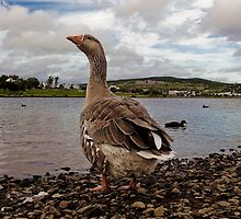 Cheeky Greylag by Daphne Johnson