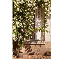 Rose Francaise Photographic Print