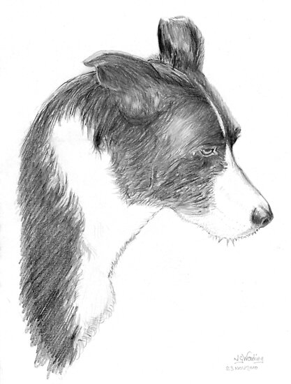Jan's dog exercise sketch by Woodie