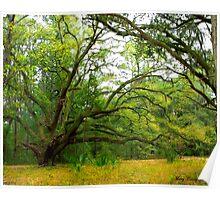 The Golden Rain Tree © Poster