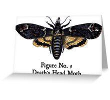 Death's Head Moth Greeting Card