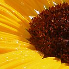 Sun Bathing Sunflower by Stacy Colean