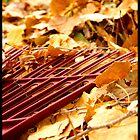 The Beauty of Autumn by Tabitha Rowland