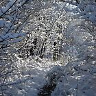 Snowy Pathway by Dreamcraft