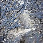 Snowy Pathway 2 by Dreamcraft
