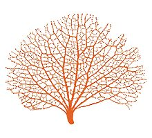 red sea fan coral silhouette by beakraus