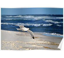 Gull and Gulf Poster