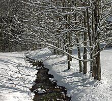 A Creek Runs Through It. by SnapShot2015