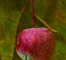 Forbidden Fruit by Gaby Swanson  Photography