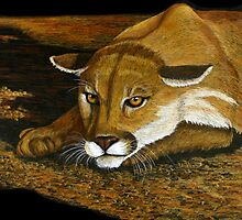Cougar in the Dark by Lorraine Foster