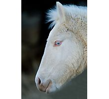 Blue-Eyed Colt  Photographic Print