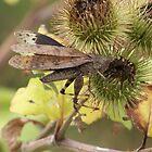 Thistle Hopper by deb cole