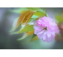 Pink Blossom #2 Photographic Print