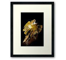 Frilled Lizard [Chlamydosaurus kingii] Framed Print