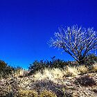 Cave Creek Trail I by Roger Passman