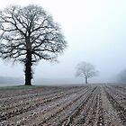 Old oak-trees in winter morning mist by jchanders