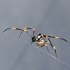 Golden Orb Weaver by gardenofbeeden