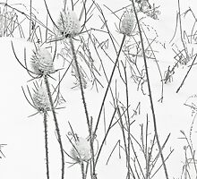 Teasels and Snow by MotherNature2