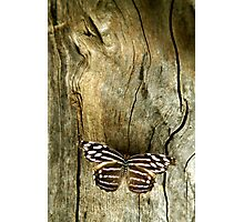 Wood Work Photographic Print