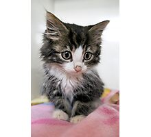Itty Bitty Cutie Kitty Photographic Print