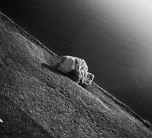 Bison Rock Near Lake by richard-harlos