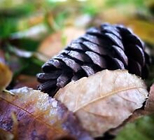 Pine Cone and Fallen Leaves by richard-harlos
