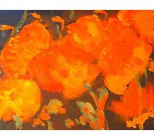 Wild Poppies (oil on canvas 23 X 30 cm) Photographic Print
