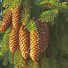 Cluster of Cones by tinmar