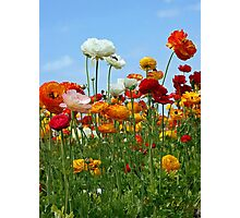 """Spring is Nature's Way of Saying """"Let's Party!"""" Photographic Print"""