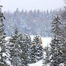 Canada's Winter Wonderland by vette