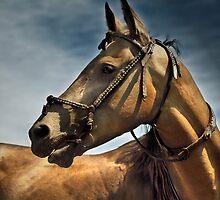 akhal-teke stallion  by Dan Shalloe
