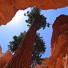 Bryce Canyon - Wallstreet by Luke Brannon
