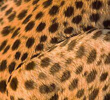 Cheetah coat by Wild at Heart Namibia