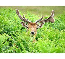 Hello Deer Photographic Print
