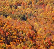 Fall in the Berkshires by Jeannette Sheehy
