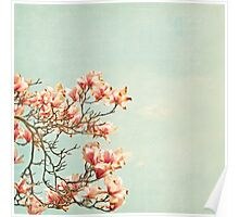 Pink Magnolia Flowers on Aqua Blue Green and French Script Poster