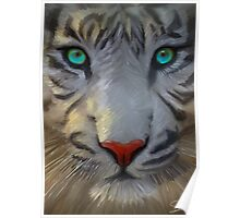 Beautiful White Tiger Poster