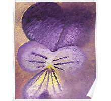 Oil painting of Viola Tricolor - Heartsease  Poster