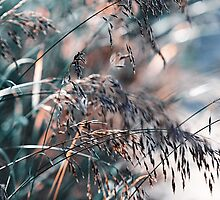 Silver Grass After Rain  by JennyRainbow
