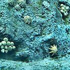 Under Water by TerraChild