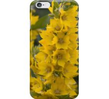 Small Yellow flowers 3 iPhone Case/Skin
