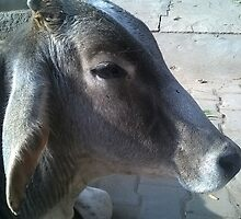 RELAXED BULL ON THE SPIRITUAL HIGHWAY. by BhakteesYogis