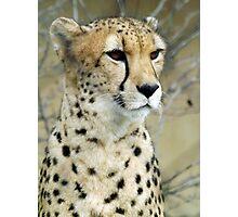 My Cheetah Love Photographic Print