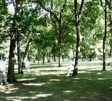 groomsmen amongst the trees by bpartain