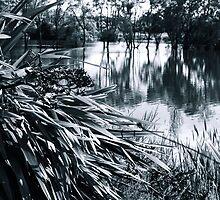 Textures at the Lake by Belinda Osgood