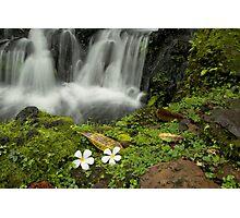 Peaceful waterfall Photographic Print
