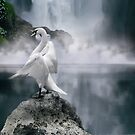 Swan Song by Varinia   - Globalphotos