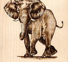 Elephant by Joanne Phillips
